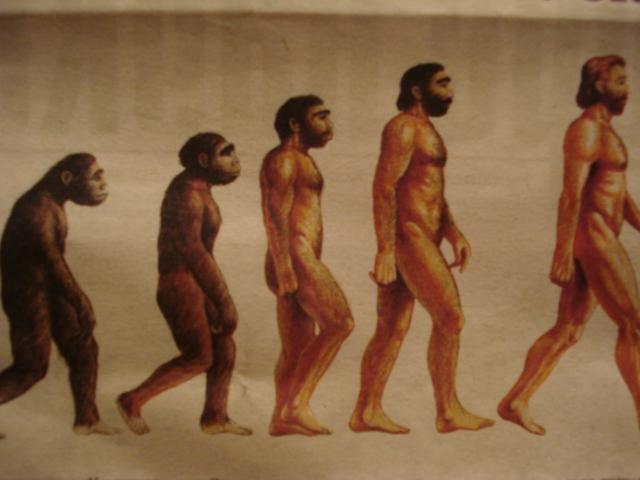 ЕДИНЕНИЕ Аналитическая информация Наука Эволюция человека ускоряется